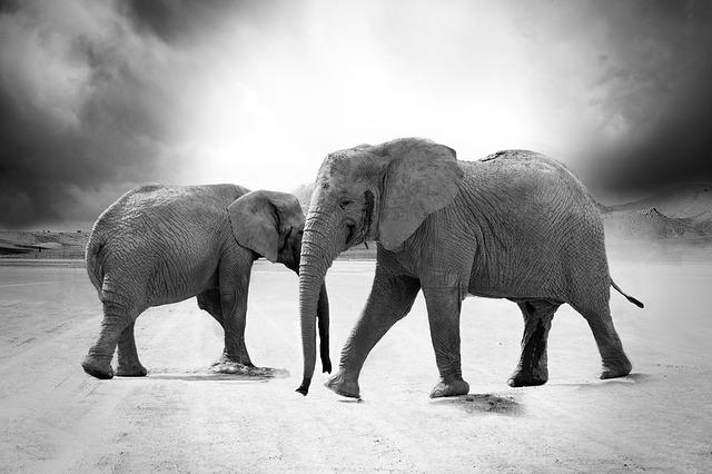 cool elephants