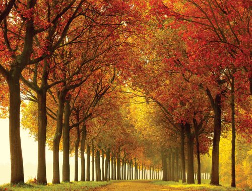 Autumn Colors Nature Wall Mural