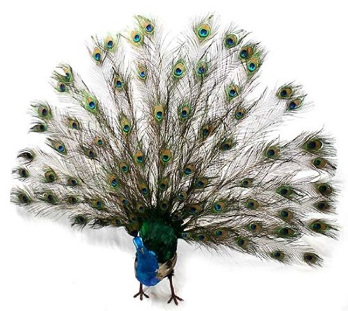 Life Size Peacock Statue